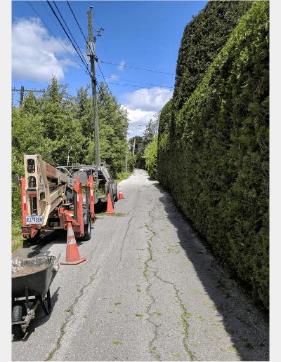 Service d'arbres du quartier